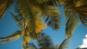 Palm trees at tropical coast stock footage