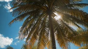 Palm trees at tropical coast. 4k ultrahd, Palm trees at tropical coast, vintage toned and film stylized. Vintage coconut palm tree on beach blue sky with stock video footage