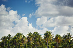 Palm trees at tropical coast landscape Royalty Free Stock Photo