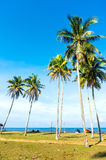 Palm trees at tropical coast Royalty Free Stock Photos