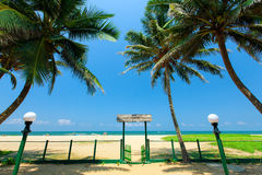 Palm trees at the tropical coast Stock Photo