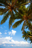 Palm trees at the tropical coast Stock Photos
