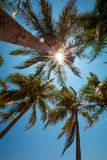 Palm trees at the tropical coast Royalty Free Stock Photo