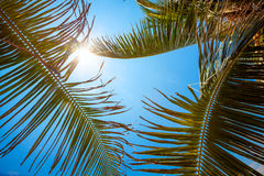 Palm trees at the tropical coast Stock Images