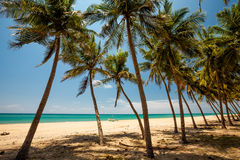 Palm trees at the tropical coast Royalty Free Stock Images
