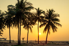 Palm trees at the tropical coast in Sri Lanka Stock Image