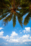 Palm trees at the tropical coast in Sri Lanka Royalty Free Stock Photos