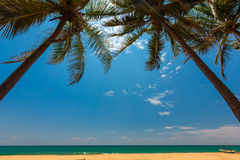 Palm trees at the tropical coast in Sri Lanka Royalty Free Stock Photo
