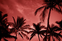 Palm trees on tropical coast at sunset, toned photo. Royalty Free Stock Images