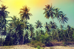 Palm trees at tropical coast, vintage toned Royalty Free Stock Photo