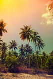 Palm trees at tropical coast Stock Photos