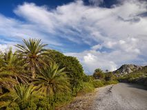 Palm Trees Tropical Coastal Landscape Road Royalty Free Stock Photography
