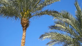 Palm trees in tropical country stock video footage