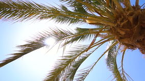 Palm trees in tropical country stock footage