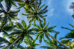 Palm trees in tropical forest Royalty Free Stock Images