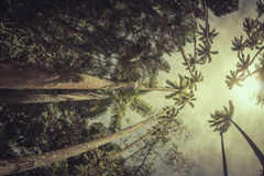 Palm trees in the tropical forest Royalty Free Stock Photos