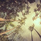Palm trees in the tropical forest Royalty Free Stock Images