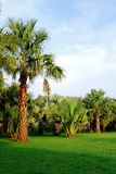 Palm trees in tropical garden Stock Photo