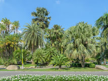 Palm trees in tropical garden Stock Photography