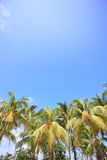 Palm trees of the tropical island.  Stock Photography