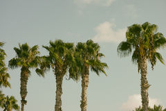 Palm trees on a tropical island.  Royalty Free Stock Photo