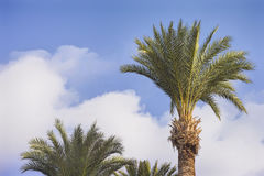 Palm trees on a tropical island. Against blue sky Royalty Free Stock Photography