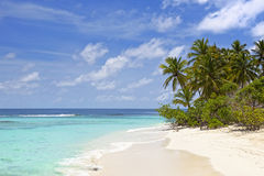 Palm trees on an tropical island beach Stock Images