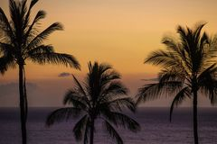 Palm trees on a tropical island during a colorful sunset. Palm trees on a Hawaiian Beach during sunset Stock Photo