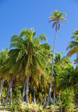 Palm trees on tropical island Royalty Free Stock Photography