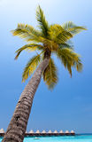 Palm trees on tropical island at ocean Stock Image