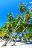 Palm trees on tropical island at ocean. Maldives Royalty Free Stock Images