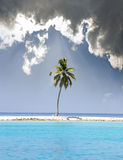Palm trees on tropical island at ocean. Maldives Stock Image