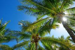 Palm trees  on a tropical island Royalty Free Stock Photos