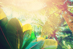 Palm Trees Tropical Landscape Holiday Background Stock Photography