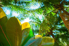 Palm Trees Tropical Landscape Holiday Background Stock Images