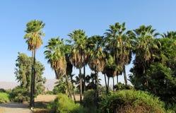 Palm trees tropical landscape Stock Photos