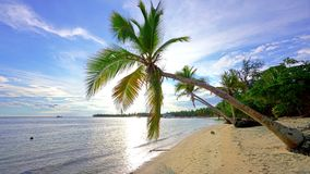 Palm trees on tropical ocean beach in dominican republic stock video