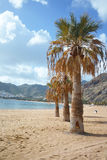 Palm trees on tropical paradise - beach Teresitas, Tenerife, Can Stock Photos