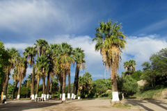 Palm trees in tropical park Royalty Free Stock Photography