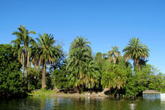 Palm trees in tropical park near the lake Royalty Free Stock Photo