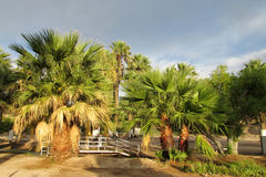Palm trees in tropical park Royalty Free Stock Images