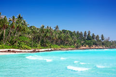 Palm trees in tropical perfect beach. At Koh Kood , Thailand Royalty Free Stock Photo