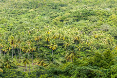 Palm Trees in Tropical Rain Forest Stock Photos