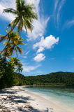 Palm trees at a Tropical Raja Ampat Beach with Royalty Free Stock Images