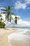 Palm Trees Tropical Remote Brazilian Island Beach Stock Photos
