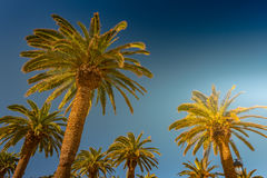 Palm trees in a tropical resort at beautiful sunny day. Image of tropical vacation and sunny happiness. Filtered vintage photo stock photography