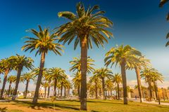 Palm trees in a tropical resort at beautiful sunny day. Image of tropical vacation and sunny happiness. Filtered vintage photo Royalty Free Stock Photos