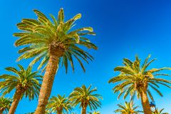Palm trees in a tropical resort at beautiful sunny day. Image of tropical vacation and sunny happiness. Filtered vintage photo Stock Images