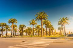 Palm trees in a tropical resort at beautiful sunny day. Image of tropical vacation and sunny happiness. Royalty Free Stock Photography