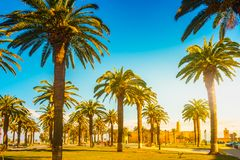 Palm trees in a tropical resort at beautiful sunny day. Image of tropical vacation and sunny happiness. Filtered vintage photo Royalty Free Stock Photo